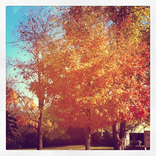 I really can't get enough of the fall leaves.