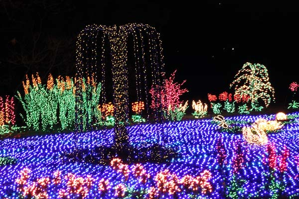 ... Garden d'Lights | Bellevue.com - Garden D'Lights Festival - Bellevue Events, Happenings, Attractions