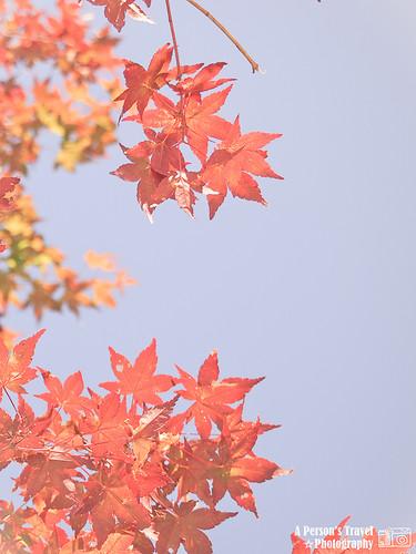 2011Kyoto_Japan_Index