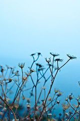 on the seashore (jollila) Tags: blue autumn plant fog nikon shore kasvi syksy ranta sumu sininen d90