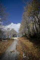 Per i boschi dei Nebrodi (Andrea Rapisarda) Tags: wood italy mist fall nature colors foglie nikon italia ngc natura sicily nebbia autunno sicilia nationalgeographic bosco sigma1020mm parcodeinebrodi d7000 andrearapisarda