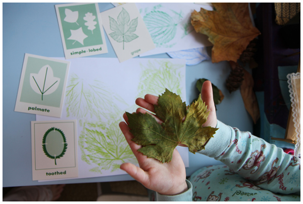 Leaf rubbings and characteristics homeschooling activity