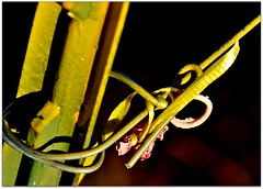 Tying the knot (Stella Blu) Tags: stella canada green fall dof blu alberta stellablu atuumn nikkor105mmf28gvrmicro nikond5000 pregamewinner gamesweepwinner