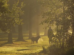 early walk (Foto Dominic) Tags: morning dog nature fog sunrise nevel wandelen walk natuur hond ochtend zonsopgang herentals finegold flickrgoldaward flickrbronzeaward flickrsilveraward universalelite fineplatinum antromeda finestdiamond fotodominic