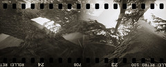 the view from the tree trunk (pho-Tony) Tags: camera bw 3 film home rollei 35mm iso100 diy pin hole ishootfilm retro pinhole homemade pineapple 35mmfilm processing multiple blender 100 135 multiframe sprocket perforation stenope homemadecamera comptonverney ilfosol pinholeblender filmisnotdead homemadepinhole diycamera ilfotol ilfosol3 incameramultiframe