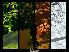 The_Four_Seasons_by_da_jedas (HRK billede arkiv) Tags: test grafik ewewew rstid