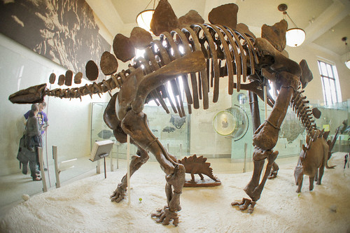 dinosaur skeleton by BadSwan, on Flickr