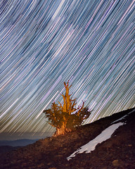 Ancient Bristlecone Star Trails (Jeffrey Sullivan) Tags: california copyright usa jeff nature night canon shower photography star photo october trails astrophotography astronomy sullivan landscpae bishop meteor allrightsreserved easternsierra bigpine 2011 jeffsullivan orionid 5dmarkii