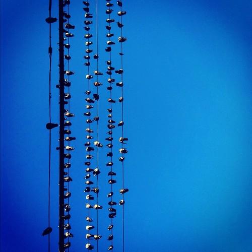Mission Birds