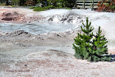 PAINT POT ~ YELLOWSTONE ~ WYOMING (Image By Design Works ) Tags: wet mud gas clay heat minerals bubble sulphur yellowstone wyoming volcanic thermal vapor venting microorganisms mudpot imagebydesignworks yellowstonenationalpark fountainpaintpot paintpot hydrogensulfide sulfuricacid