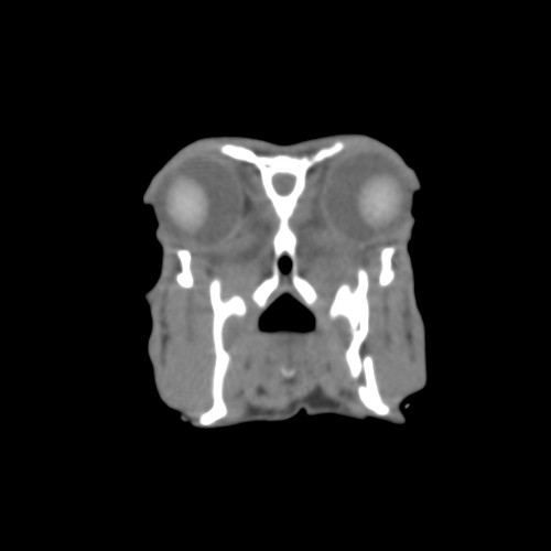 Rufus rostral caudal CT with L mandible fx