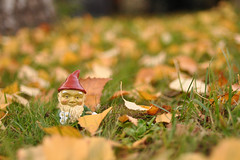 Knee deep in leaves (hddod) Tags: autumn leaves gnome weelittlegardengnome 2011 2011yip