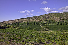 young vineyards (vvvita_) Tags: sky nature vineyards mountainview grape wildworld