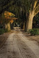 Selma Sunset (nailbender) Tags: road sunset tree fall moody cemetary spanishmoss selma nailbender selmaalabama liveoakcemetary