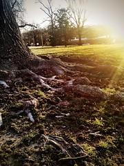 Gnarly (childekatherine) Tags: sky color tree nature sunrise sunflare