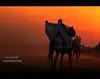 Sunset Knight Benghazi (العقوري [ Libya Photographer ]) Tags: sunset sun sport set canon eos nikon sigma os 7d knight 1855 libya benghazi 70300 فارس ابراهيم جواد d40 alahli حصان alahly خير احصنه فرسان بنغازي الثورة مهد بنغازى العقوري mygearandme mygearandmepremium mygearandmebronze mygearandmesilver mygearandmegold mygearandmeplatinum mygearandmediamond الشرارة الشراره