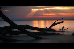 Should I Stay or Should I Go (jeffsmallwood) Tags: longexposure morning trees light color beach water sunrise dawn bay decay maryland rays chesapeake chesapeakebay