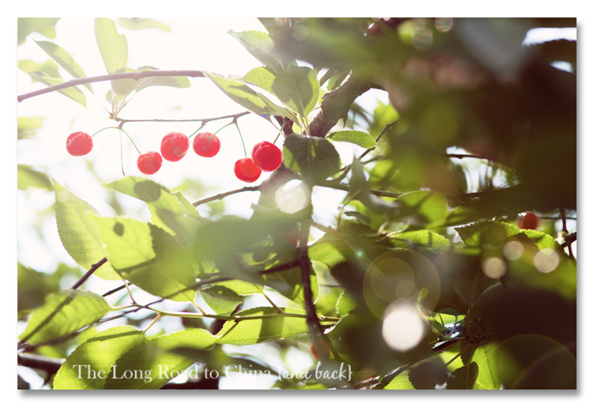 Cherries SUNGLARE BLOG
