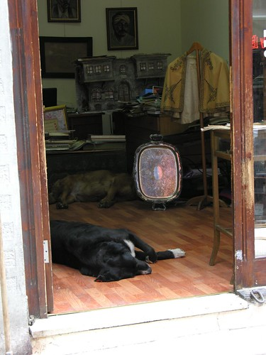 Egy példa, hogy a kutyák és a macskák rokonok...