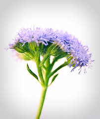 181/365 2011 Purple Flower (susiecw47) Tags: flower nature fleur sunshine outdoors purple lavender olympus potd 365 e500