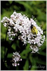 Life's reality (jyppe) Tags: flower macro spider flies fotowalk nikond700 tamron1024 jyppe hvardloeng