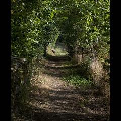 Chemin d'Aveyron