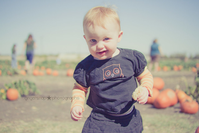 pumpkin patch8