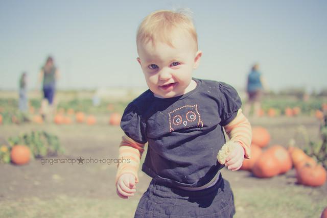pumpkin patch8
