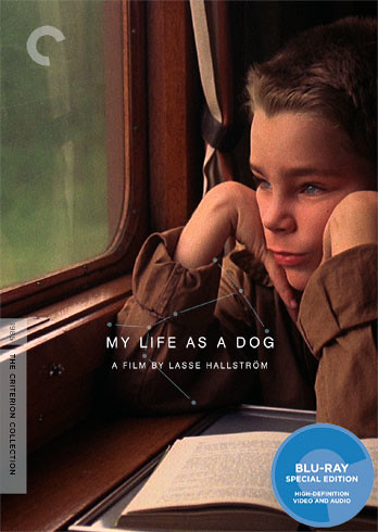 my-life-dog-criterion-blu-ray
