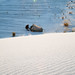 White Sands New Mexico-23.jpg