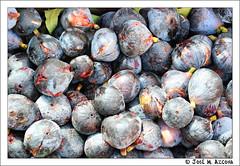 Higo (Ficus carica) (josemazcona) Tags: espaa spain espanha espagne hdr spanien spagna hdri spanje higo ficuscarica d80 jmaj josemanuelazconajaen josemazcona