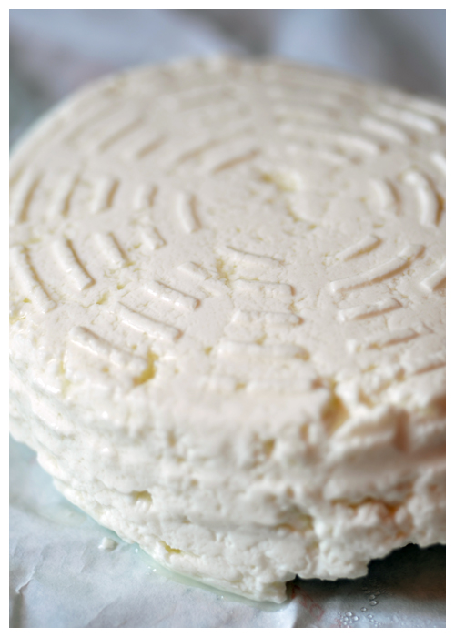 Sheep Ricotta© by Haalo