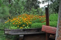 DSC_0312 (TheBosque) Tags: flowers roof flower gardens arcoiris sauna greenroof rooftopgarden earthroof earthroofs earthenroofgreen