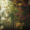 An Aesthetic Voyager (Laura L. Ruth) Tags: autumn fall texture nature forest an mystical voyager magical aesthetic hss enchanting intothewild oneofmyfavoritemovies alexandersupertramp flypaperedgeslightlyprocessed aestheticvoyager ilovehisstory