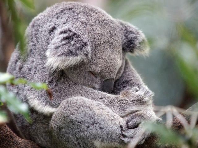 cute animal (2)