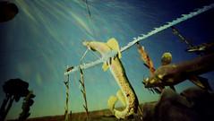 Fisherman's Dream (yarnzombie) Tags: sculpture fish color film metal highway kodak north dream large pinhole fishermans 4x5 format expired dakota largeformat enchanted develop c41 unicolor