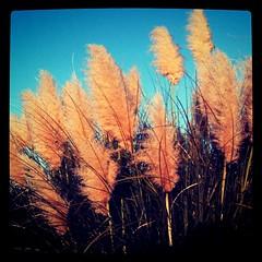 Giant flora