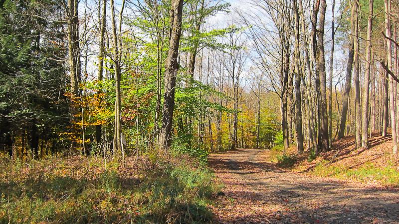 Cranberry Bog Trail