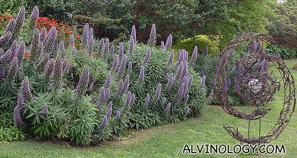 Some purple plants