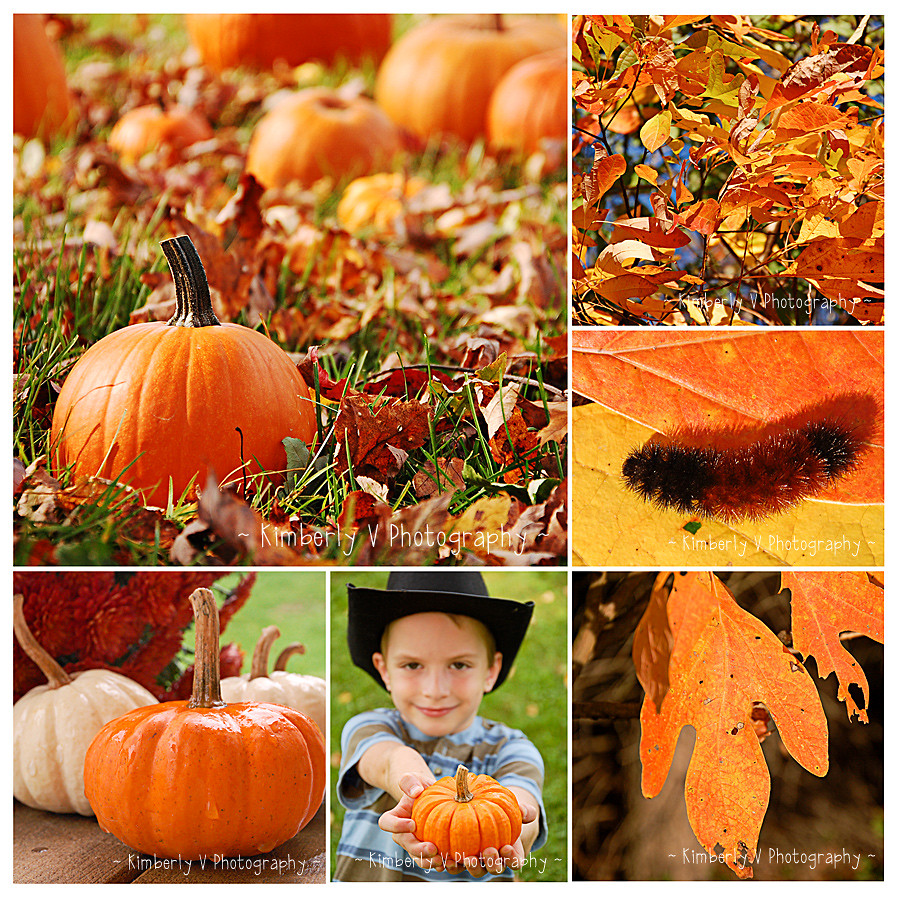 Orange shades of autumn collage