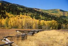 Utah aspens (Chief Bwana) Tags: aspen utah ut fallcolors psa104 chiefbwana 35mm