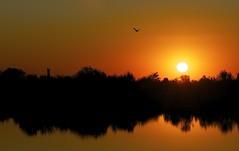 Brevi attimi (paolo-55) Tags: sunset tramonto natura controluce veneto lagunaveneta afsvrzoomnikkor70200mmf28gifed lagunadivenezia liopiccolo cavallinotreporti nikond700 tramontosullalaguna doubleniceshot mygearandme mygearandmepremium artistoftheyearlevel2