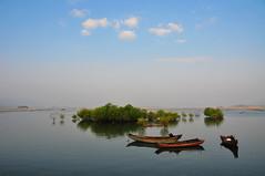 Mangrove  (Mel@photo break) Tags: china blue plant tree water boat mel mangrove melinda  gunagdong fishboat huidong  chanmelmel  melindachan