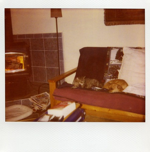 Polaroid: dog + cat + fire