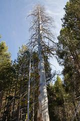 2011-10-15 10-23 Sierra Nevada 288 Yosemite National Park