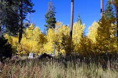 2011-10-15 10-23 Sierra Nevada 585 South Lake Tahoe