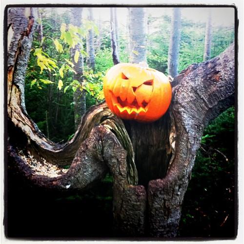 I am pumpkin, hear me roar!
