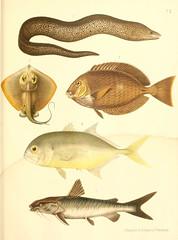 Anglų lietuvių žodynas. Žodis caranx hippos reiškia caranx begemotų lietuviškai.