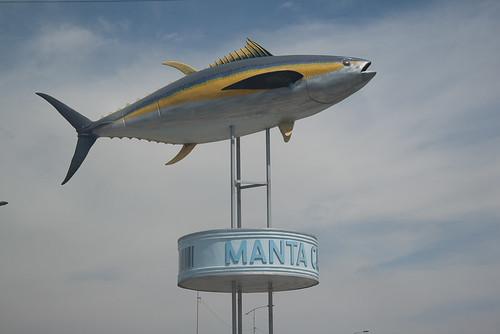 Tuna of Manta, Ecuador