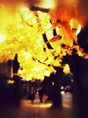 Autumn walk (Riso&Akko) Tags: life street autumn light canada color leaves vancouver dof bokeh fineart